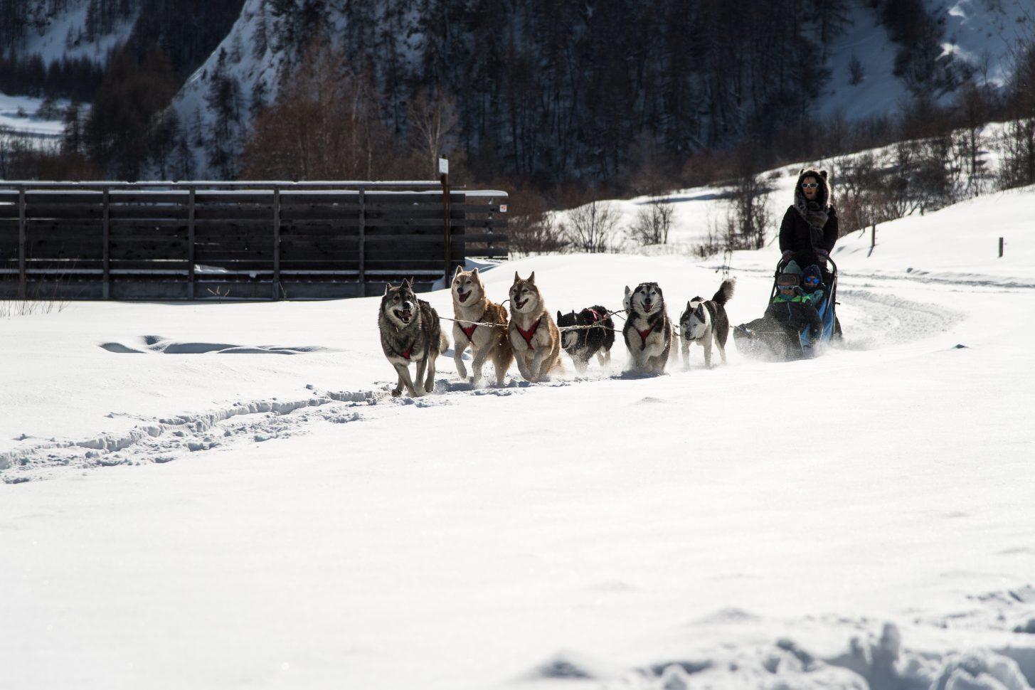 Activité chiens de traineaux à Valloire